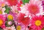 07_flowers (3)